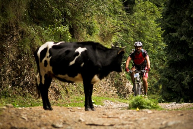 Cow Forest Rider Trail
