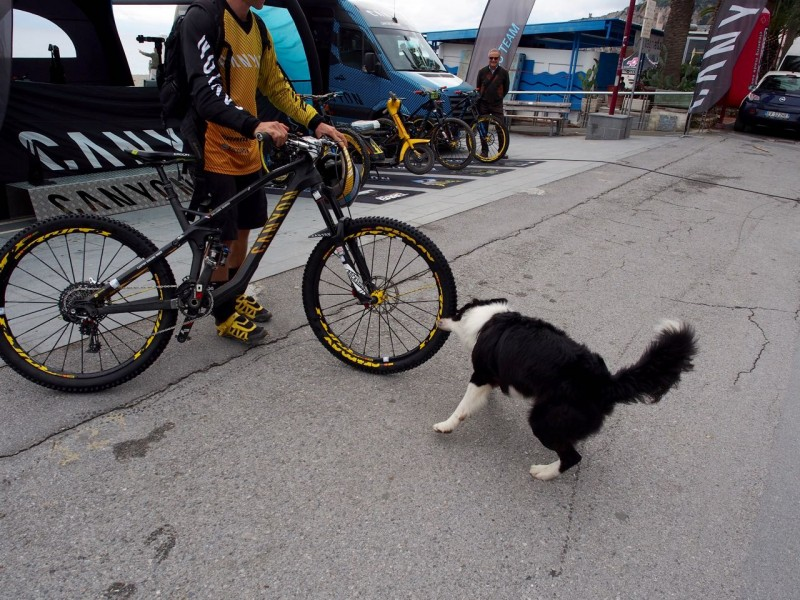 Who needs locks? Canyon's team mechanics dog is trained to stop bikes