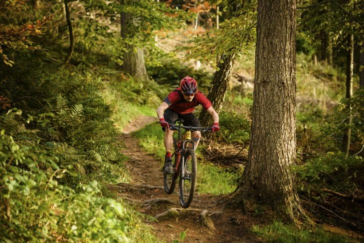 specialized epic expert wil dalby forest