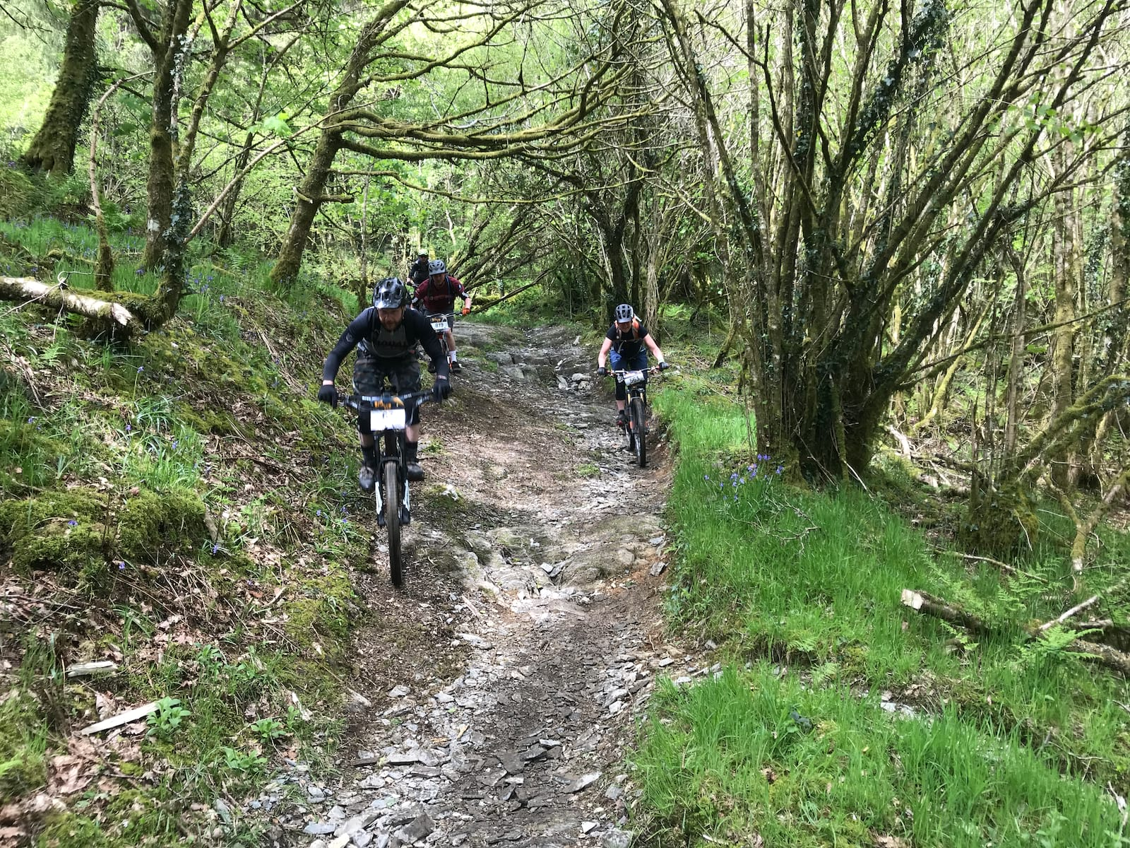 dyfi enduro descent