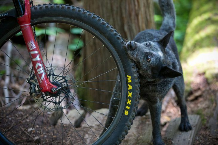 issue 137 cover dog bites tyre singletrack