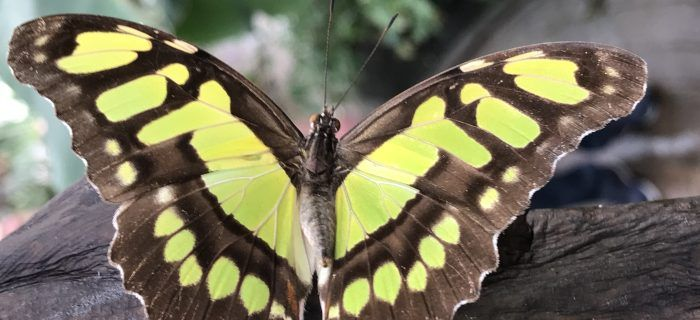 Environment sustainability butterfly